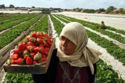 Gaza: het economisch belang van tunnels in een gevangeniseconomie